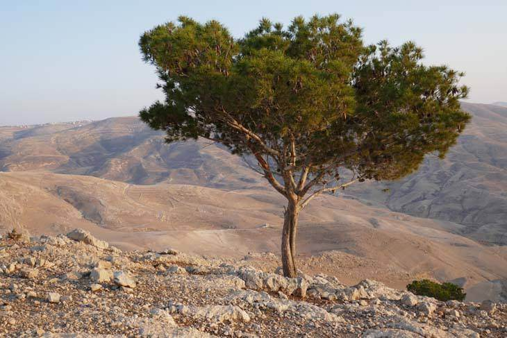 Landschaft in Jordanien